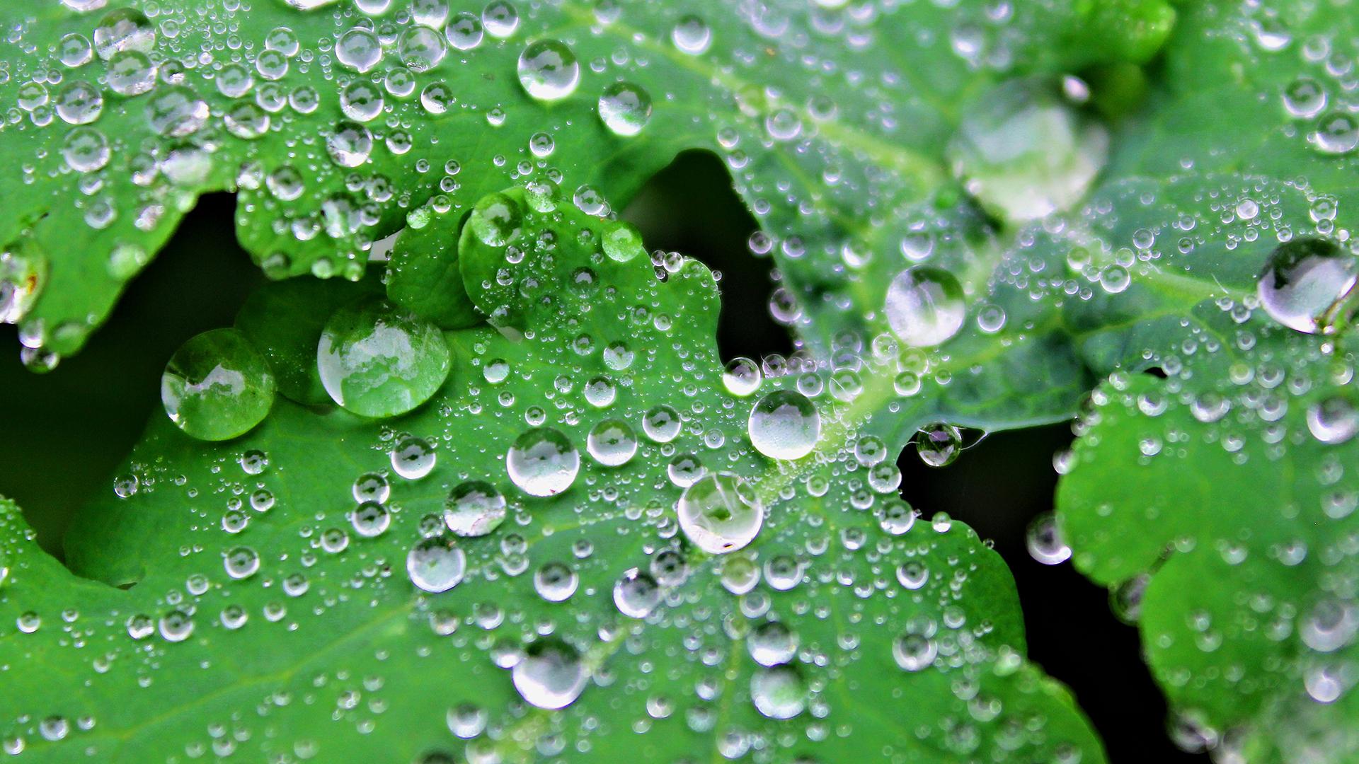Hydrophobe Blätter im Botanischen Garten Braunschweig