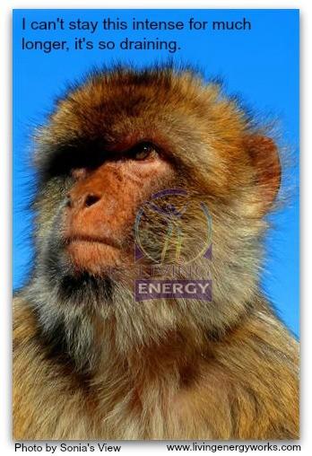 ZO 51Intense Barbary Ape Close Up_1883 (Small)