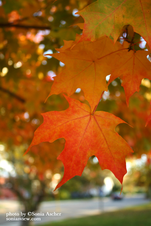 SC-296-Autumn--Leaf---Close-up-IMG_5327